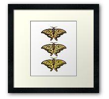 Golden Moth Framed Print