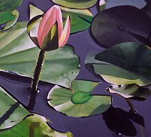 Monet's Waterlilly 2 by Tanagra Studios