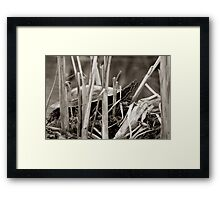 Painted Turtle Sunning Itself in Reeds Framed Print