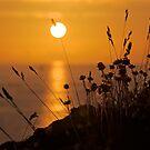 Le soleil épinglé by Jean-Luc Rollier
