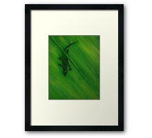 Gecko Leaf Framed Print