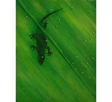 Gecko Leaf Photographic Print