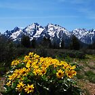 Wildflowers and the Grand Tetons by Tori Snow