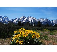 Wildflowers and the Grand Tetons Photographic Print
