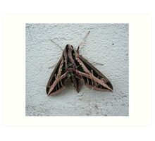 Sphinx Moth After Rain Art Print