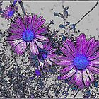 Daisys by blacknight