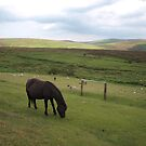 Dartmoor View by kalaryder