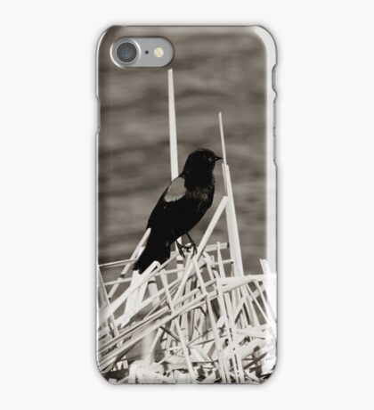 Red Winged Blackbird Perched on Marsh Grass iPhone Case/Skin