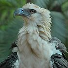 Baby Sea Eagle by Penny Smith