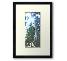 Grounded Cypress Framed Print