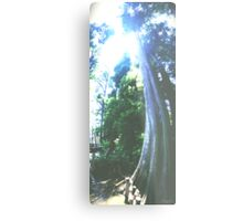 Grounded Cypress Metal Print