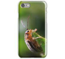 Viburnum leaf beetle Pyrrhalta viburni iPhone Case/Skin