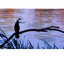 Perched Photographic Print