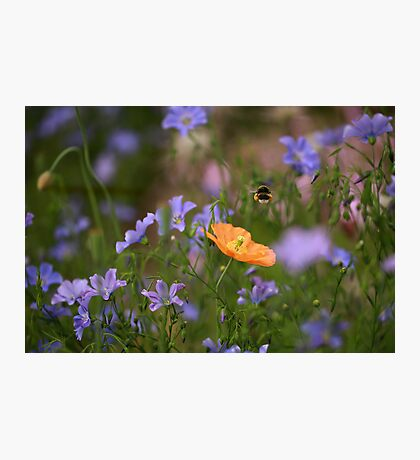 On the Summer Glade Photographic Print