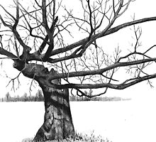 Gnarly Tree with Twisted Branches, Pencil Drawing by Joyce Geleynse