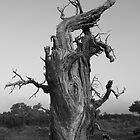 Populus B&W 004 by jasonksleung