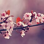 Soft side of Spring III by CarlaSophia