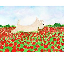 Scottie Dog 'Poppy Fields' Photographic Print