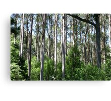Forest of Eucalyptus Sticks Canvas Print