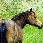 A Horse by Diane Arndt