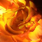 Tequila sunrise rose by StudioCorvid