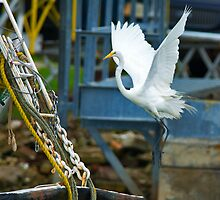 Great White Egret follows Shrimp Boat by Photography by TJ Baccari
