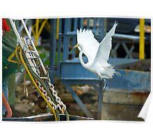 Great White Egret follows Shrimp Boat Poster