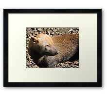 Bush Dog Profile Framed Print
