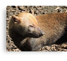 Bush Dog Profile Canvas Print