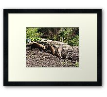 It's down here somewhere.... Framed Print