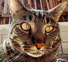 A very close-up of Louie the Cat by luciferstone