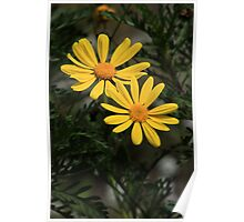 Yellow Flowers in a Garden Poster
