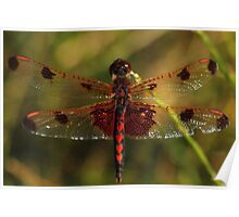Calico Pennant #1  Poster