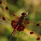 Calico Pennant #3 by Kane Slater
