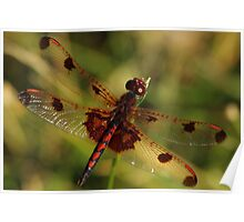 Calico Pennant #3 Poster