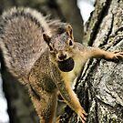 The Playful Squirrel by Brian Gaynor