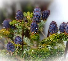 Small purple cones by missmoneypenny