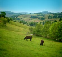 Cows in the Field by Eileen McVey