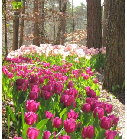 Tulip path Sticker