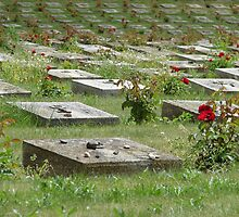 Cemetery roses - Fort Terezín (National Suffering Memorial) by Natas