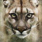 Puma by polly470