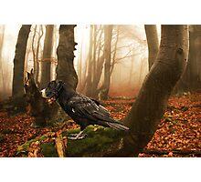 Dogbird Photographic Print