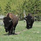 Two Bison by Tori Snow