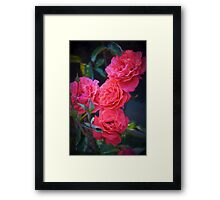 Rose 138 Framed Print
