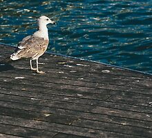 Seagull On The Pier by PatiDesigns