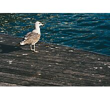 Seagull On The Pier Photographic Print