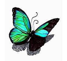 Fading Turquoise Butterfly Photographic Print