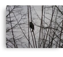 Solitary Black Bird In A winter Tree Canvas Print