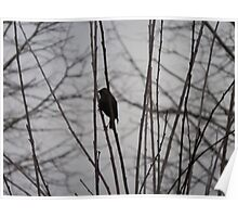 Solitary Black Bird In A winter Tree Poster
