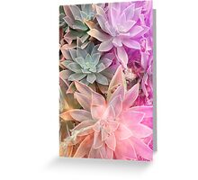 ColourfulSucculents Greeting Card